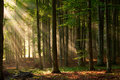 Autumn Forest Trees. Nature Green Wood Sunlight Backgrounds. Royalty Free Stock Photos - 40465468