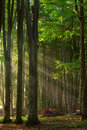 Autumn Forest Trees. Nature Green Wood Sunlight Backgrounds. Royalty Free Stock Images - 40465469