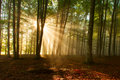 Autumn Forest Trees. Nature Green Wood Sunlight Backgrounds. Royalty Free Stock Photos - 40465478