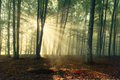Autumn Forest Trees. Nature Green Wood Sunlight Backgrounds. Royalty Free Stock Photo - 40465655