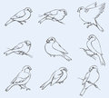 Vector Outline Image. Set Of Tits And Bullfinches Royalty Free Stock Images - 40474499