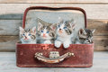 Kittens Look Up In Suitcase Royalty Free Stock Image - 40492646