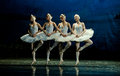 Four Little Swan Dance Royalty Free Stock Images - 40493559