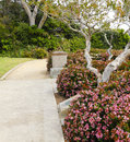 Walkway With Blooming Bushes Along Side. Laguna Beach Trip Stock Image - 40510241