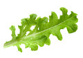 Lettuce Salad Leaf Isolated Royalty Free Stock Image - 40540116