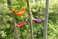 Hammocks Between Trees Royalty Free Stock Photography - 40557227