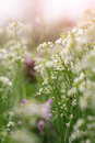 Delicate Background With Wildflowers Stock Photos - 40582573