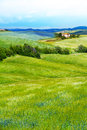 Flower Filed In Tuscany Landscape, Italy Royalty Free Stock Photo - 40595065