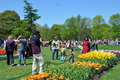 Tulip Festival In Albany, New York State Royalty Free Stock Photos - 40607728