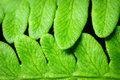 Close Up Of Fern Leaves Stock Image - 40608001
