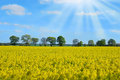 Spring Landscape With Rape Field And Trees Stock Images - 40614524