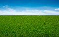Green Grass And Sky, Background Stock Photography - 40615782