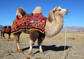 Photo Camels Against Mountain. Royalty Free Stock Images - 40627749
