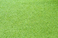 Grass Texture Royalty Free Stock Photography - 40637057