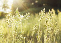 Native Grass Prairies And Sunset Royalty Free Stock Photography - 40645927