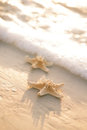 Two Starfish On Sea Ocean Beach In Florida, Soft Gentle Sunrise Stock Image - 40650571