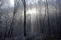 Winter Sun Light Is Coming Through The Frozen Forest Trees Stock Images - 40730464