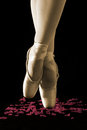 A Ballet Dancer Standing On Toes On Rose Petals With Black Backg Stock Photos - 40731703