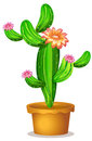 A Pot With A Flowering Cactus Plant Royalty Free Stock Image - 40741686