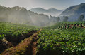 Sunrise At Strawberries Farm In Thailand Stock Photography - 40742012