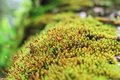 Moss In The Woods Stock Photo - 40743540