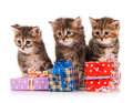 Cute Kittens Stock Images - 40753664