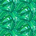 Tropical Vintage Pattern With Big Banana Leafs Stock Photos - 40753893