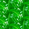 Tropical Vintage Pattern With Big Banana Leafs Royalty Free Stock Images - 40753949