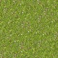 Spring Lawn With Some Flowers. Seamless Texture. Stock Image - 40757931