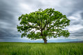 Blurred Long-Exposure Green Tree In A Field Royalty Free Stock Image - 40759916