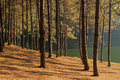 Sun Rise At Pang-ung, Pine Forest Stock Images - 40790174