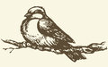 Vector Drawing. Small Titmouse On A Branch Stock Images - 40798574