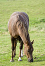 Horse Grazing Royalty Free Stock Photos - 4083748