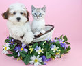 Puppy And Kitten Stock Photography - 40806802