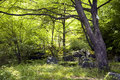 Old Tree In Spring Mixed Forest Stock Photography - 40823912