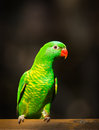 Green Bird Royalty Free Stock Photography - 40826767