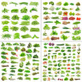 Vegetables Collection  On White Background Royalty Free Stock Photos - 40829468