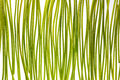 Green Stems Royalty Free Stock Images - 40835369