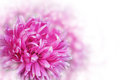 Greeting Card With Pink Flowers Over The Bokeh Background Royalty Free Stock Image - 40839476