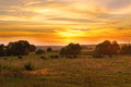 Cow Herd Grazes In Meadow At Sunset Stock Image - 40839641