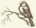 Vector Drawing. Small Titmouse On A Branch Royalty Free Stock Photo - 40854095