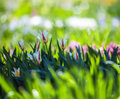 Young Flowers In The Meadow Of Fresh Green Grass On Spring Royalty Free Stock Photos - 40862948