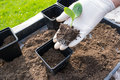 Planting Seedling Royalty Free Stock Images - 40868159