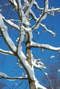 Snow On Branches Stock Photography - 4096802