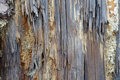 Rotten Wood Texture Stock Images - 4099964