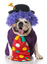 Silly Dog Stock Image - 40904881