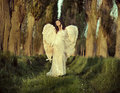 Wonderful Female Angel Walking Across The Forest Stock Photography - 40908402