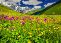 Beautiful View Of Alpine Meadows In The Caucasus Mountains. Royalty Free Stock Photo - 40923425