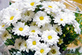 Bouquet Of Daisies Royalty Free Stock Images - 40944249