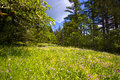 Landscape With Wildflowers On Glade And Moss On The Trees Royalty Free Stock Photos - 40959798